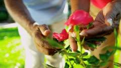 Mature African American Hands Working Garden Stock Footage