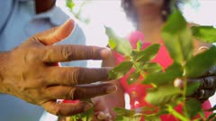 Senior Ethnic Hands Tending Flower Bushes Stock Footage