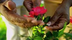 Senior Ethnic Hands Tending Flower Bushes - stock footage