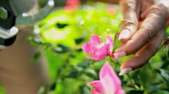 Hands Only Ethnic Couple Pruning Flowers - stock footage