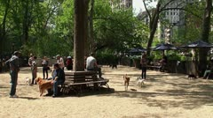 A dog playground in Madison Square Park. Stock Footage
