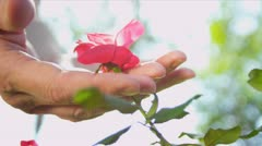 Hands Only Ethnic Couple Holding Flowers - stock footage