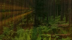 Forest pan with shafts of sunlight Stock Footage
