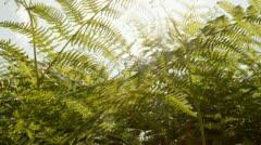 Ferns move sun Stock Footage