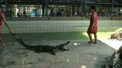 Alligators at Wildlife Park Thailand - stock footage