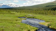 Stock Video Footage of Alaskan creek flowing along the Denali Highway on a summer day