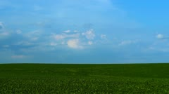 Little Fluffy Clouds Over a Soy Bean Field 2 HD Stock Footage