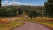 Field of Bison Stock Footage