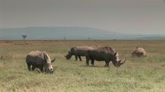 White Rhino Eating in Lake Nakuru Stock Footage