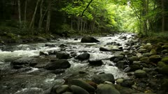Mountain River in the wood - stock footage