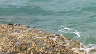 Crabs and sea Stock Footage