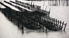 Asian Oyster Farm Stock Footage
