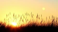 Dune sunset Stock Footage
