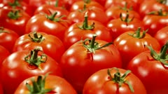 DOLLY: Fresh Tomato Background Stock Footage