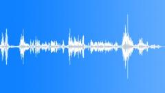 Seagulls Squabbling Sound Effect
