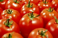 Stock Video Footage of Tomatoes