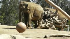 San Diego Zoo 18 elephant Stock Footage