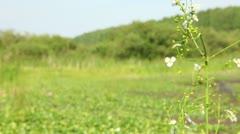 Bog flowers Stock Footage