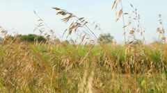 Wheat Field 1 - stock footage