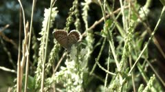 Butterfly, Stock Footage
