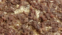 Blow Fly Larvae on Rotten Beef Part 9 Stock Footage