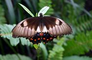 Stock Photo of australian butterfly