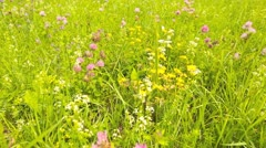 Dolly shot summer meadow close Stock Footage