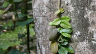 Creeping vine Stock Footage