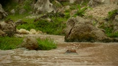 Low shot of small stream or spring, water flowing away from camera. Stock Footage
