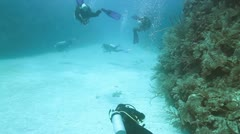 Diving in cozumel caribbean sea fish mexico Stock Footage