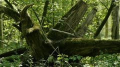 Rootstock Stock Footage