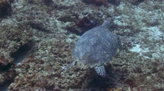 Cozumel turtle, diving mexico Stock Footage