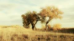 Autumn Romance Stock Footage
