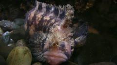 Salt water aquarium Stock Footage
