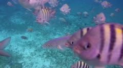 Underwater snorkeling in mexico Stock Footage