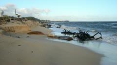 Hawaii Beach Erosion 2 Stock Footage