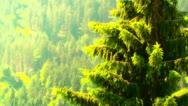 European Alps Austria 31 pine trees stylized Stock Footage