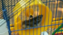Hamster on Wheel in a Cage Stock Footage