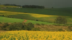 Canola fields ,Swellendam,Western Cape Stock Footage