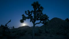 Stock Video Footage of Time Lapse of Joshua Tree at Moonrise.