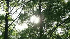 Sun behind the foliage Stock Footage