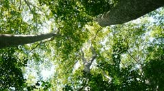 twisting view up to forest canopy - stock footage