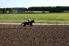 Horse Trainer Trotting Thoroughbred Stock Photos