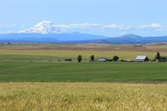 Mount Adams and farm fields - stock photo