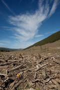 clear cut logging area - stock photo
