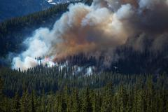 Forest fire in the rocky mountains Stock Photos