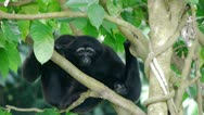 Monkey Resting Stock Footage