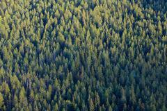 Forest Treetops Stock Photos