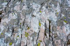 lichens on pink rock - stock photo