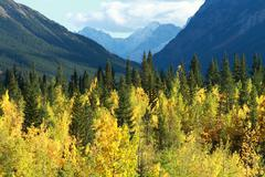 autumn color in the mountains - stock photo